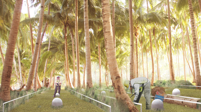 Maintaining the coconut plantation for the Global Conservancy Alliance. Film still, Five Wounds of Christ