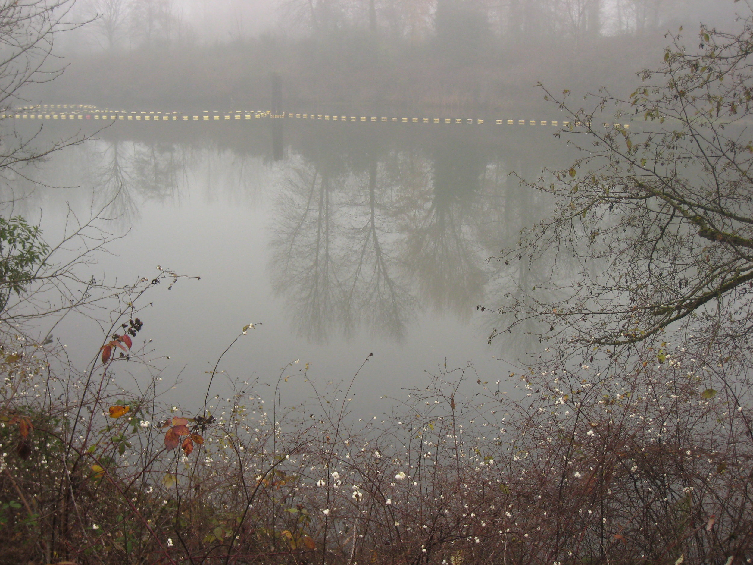 Image 4 / Snowberries, oil spill plume, and fog on the Duwamish river. Image by Don Brubeck (flickr creative commons)