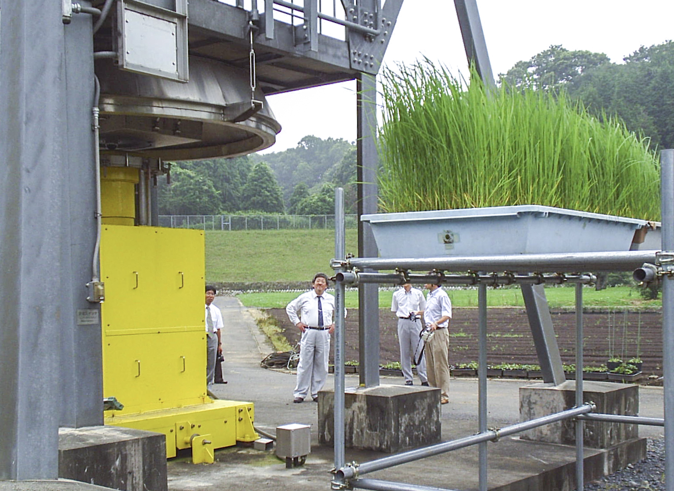 Short-lived plants like grasses are typically placed closest to the radiation source, 2016. Photograph by Govinda Rizal