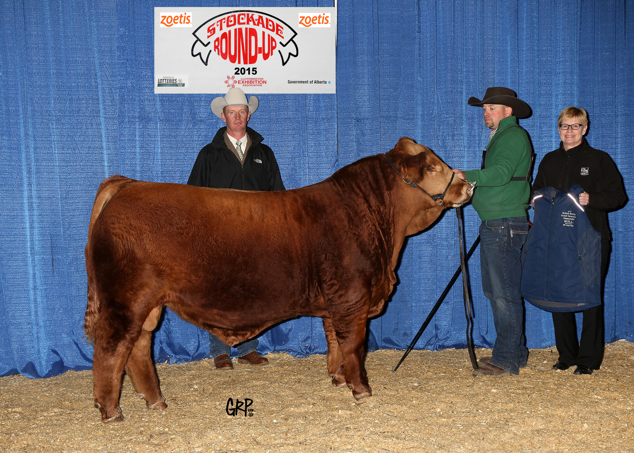 2015 Grand Champion Simmental Bull exhibited by   ERIXON SIMMENTALS INC