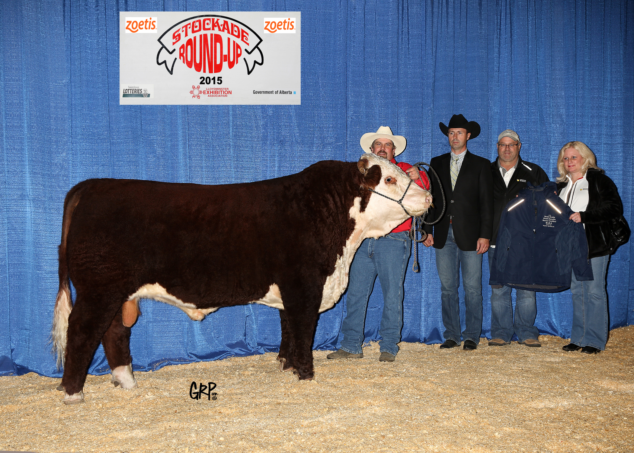 2015 Grand Champion Horned Hereford Bull exhibited by  BRADY MONCRIEFF