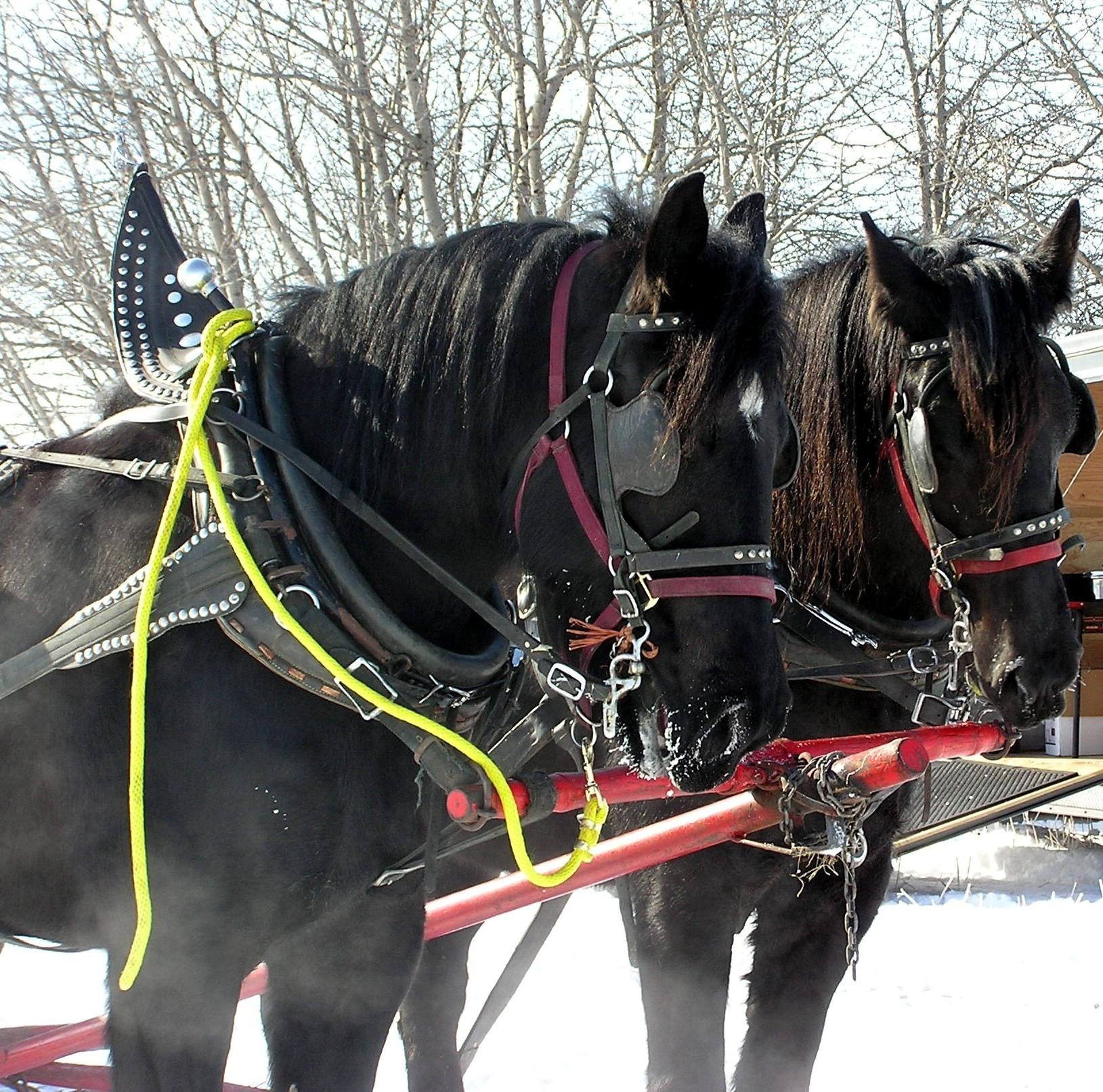 2006 horses.jpg