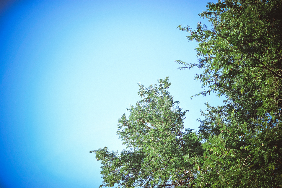 san   diego wedding photographer   leaves and branches of trees with clear blue sky   behind