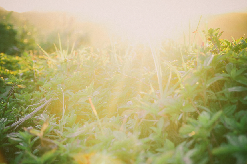 san   diego wedding photographer | exposed shot of plants with sun about to set   behind
