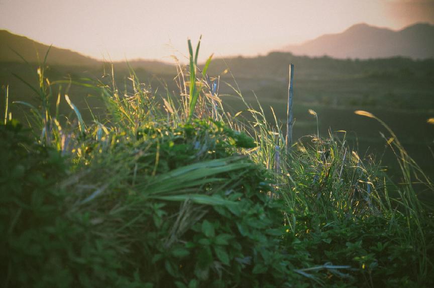 san   diego wedding photographer | plants illuminated by sun setting