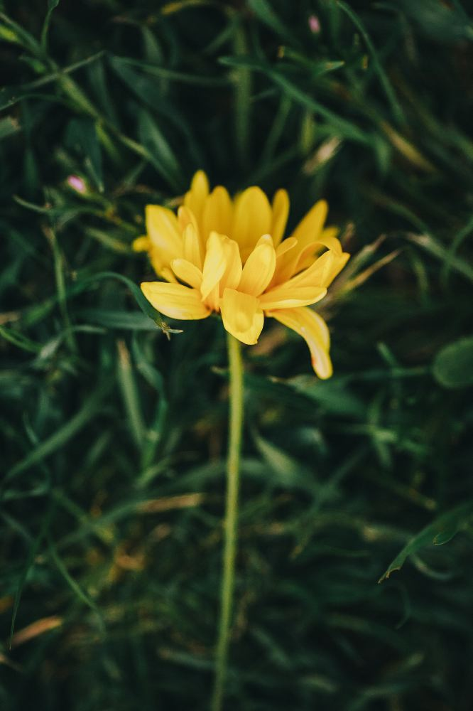 san   diego wedding photographer | closeup of yellow flower