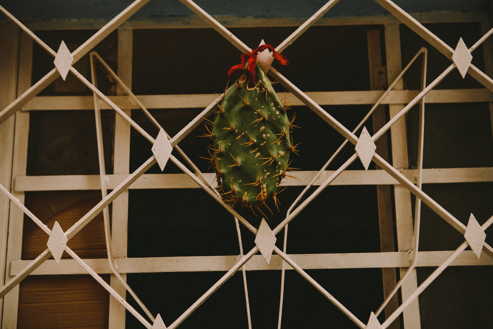 san diego wedding   photographer | cactus hanging from window grate