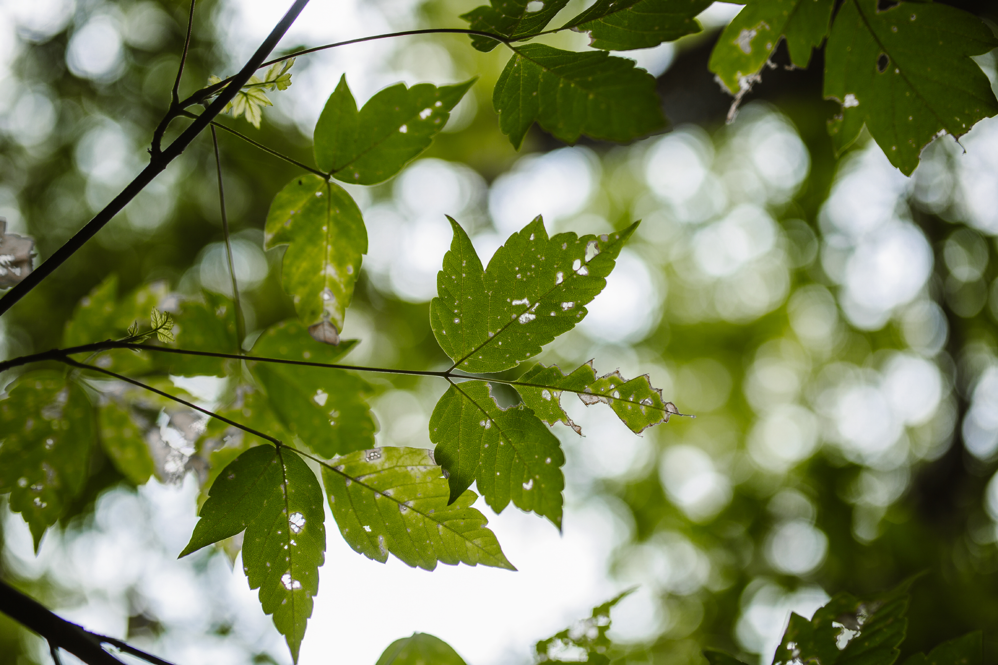 san diego wedding   photographer | tree leaves against sky