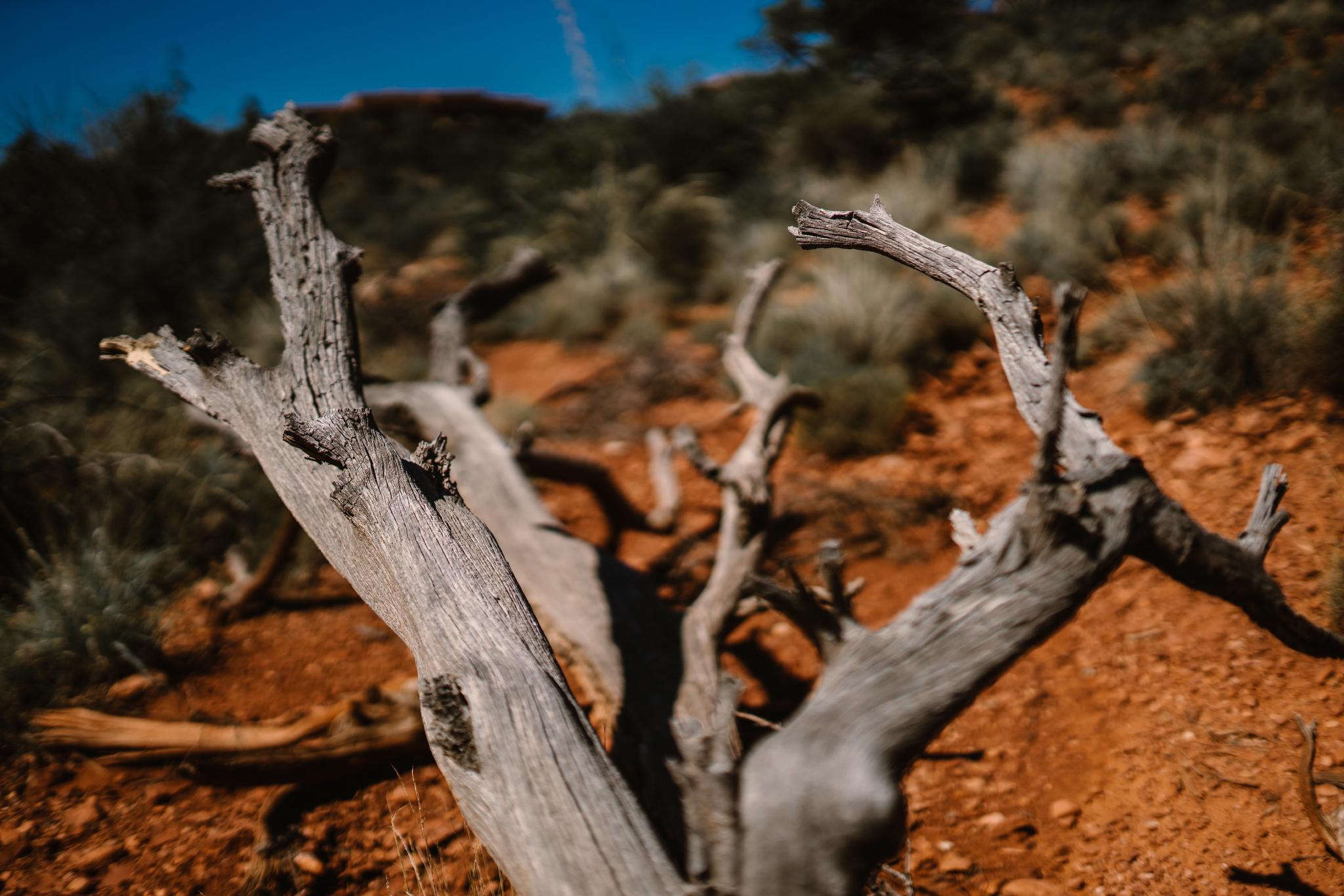 san diego wedding   photographer | dead tree branch on canyon ground