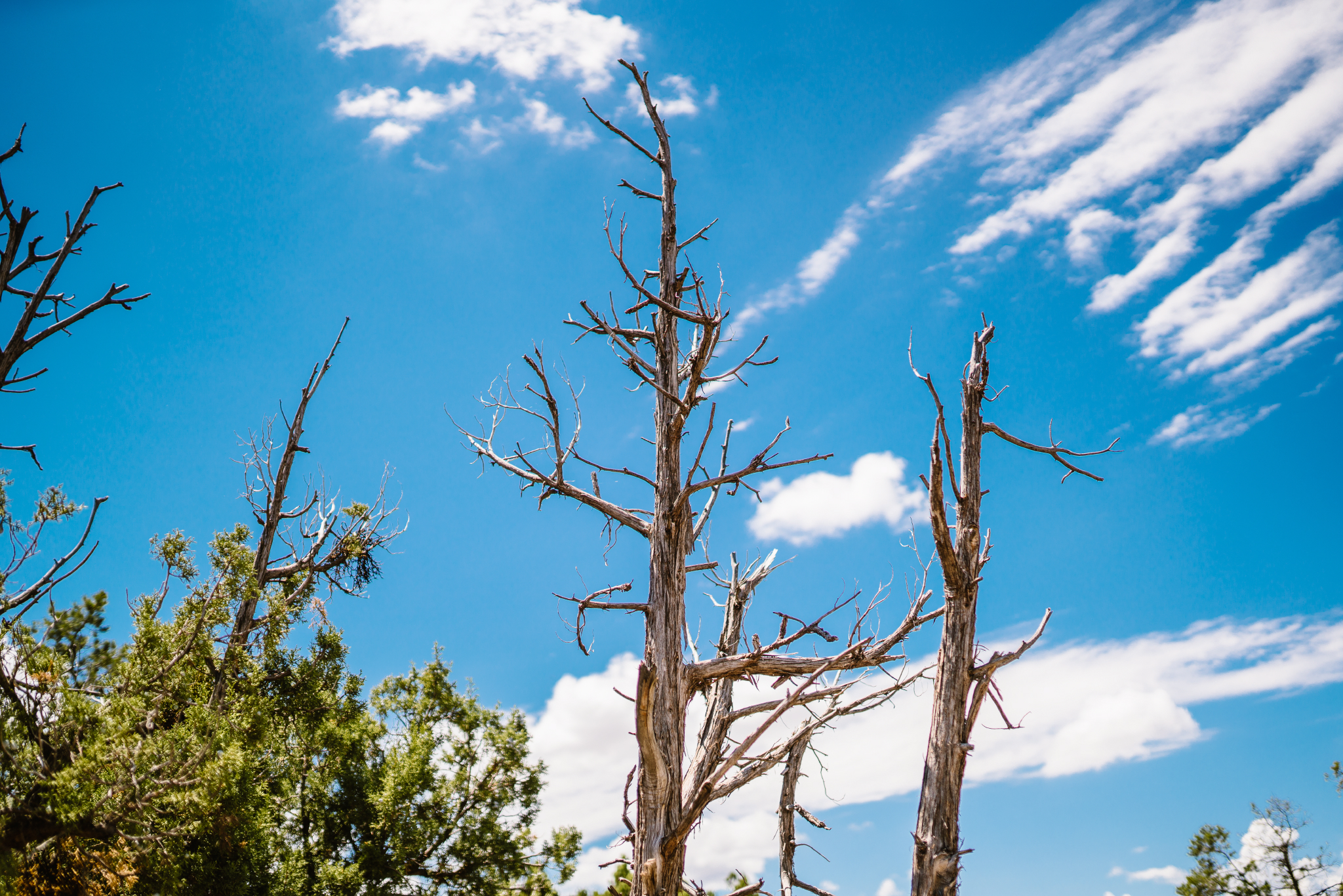 san diego wedding   photographer | dead tree branches against blue sky