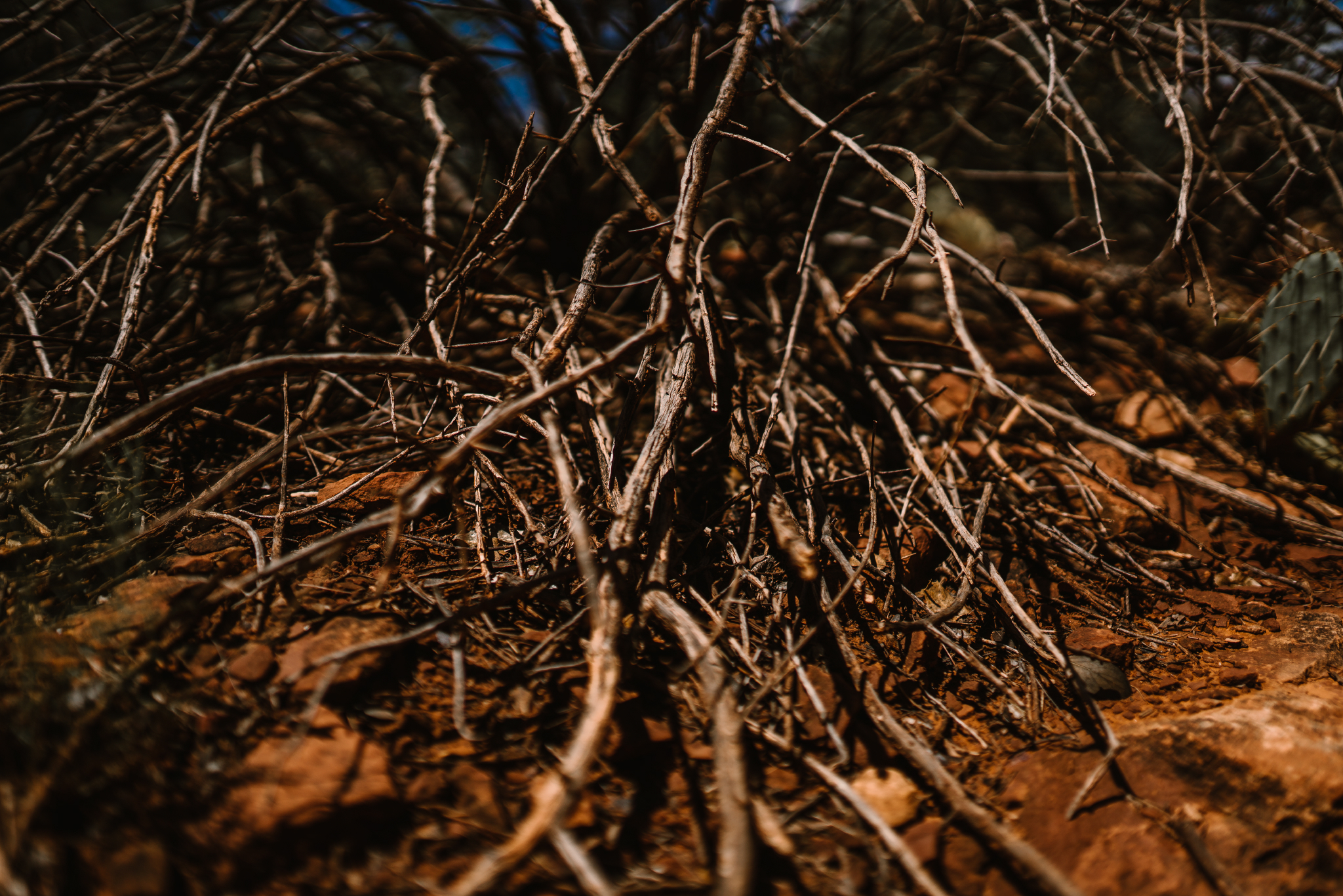 san diego wedding   photographer | collection of dead branches on canyon ground