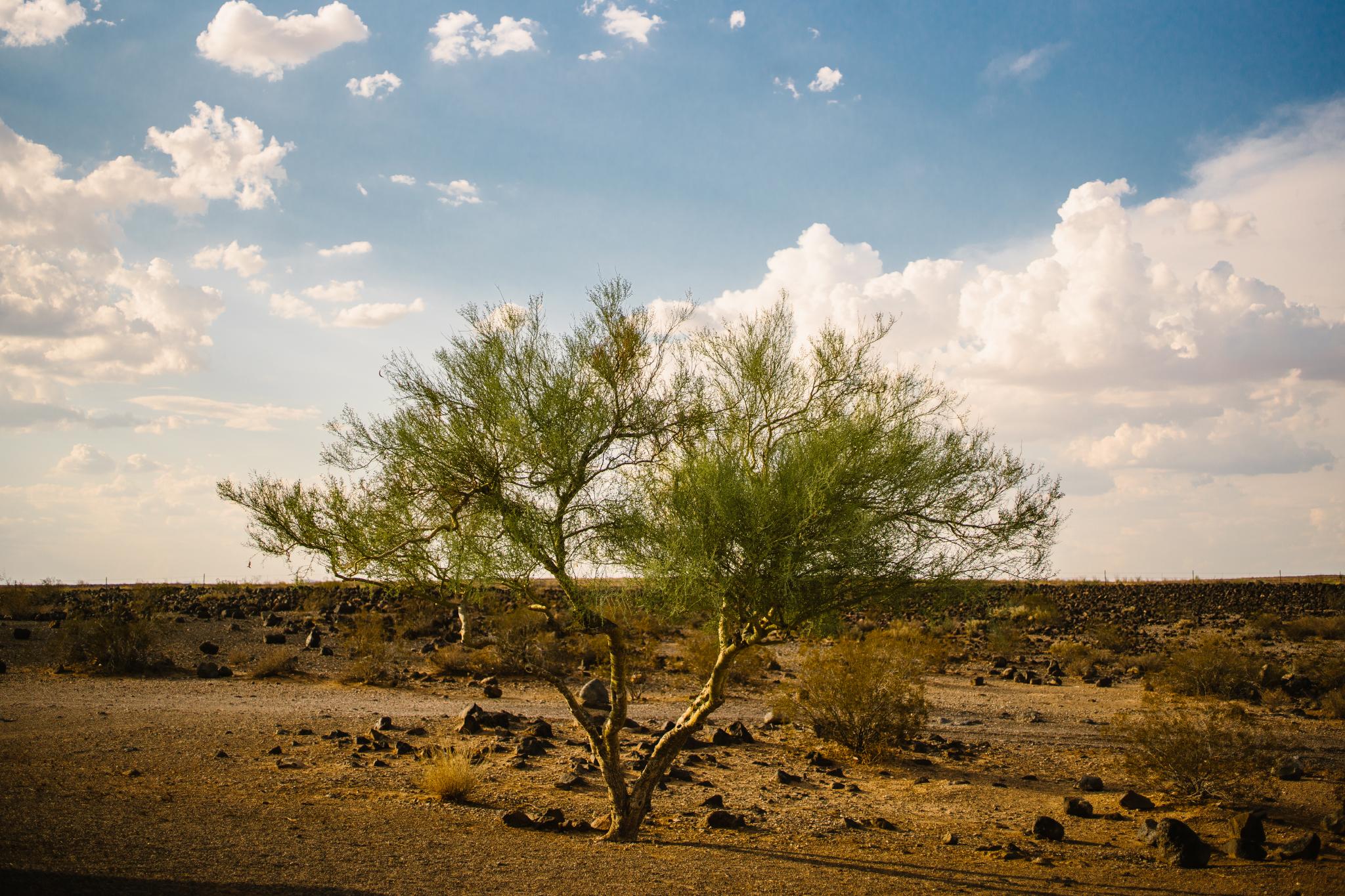 san diego wedding   photographer | lone tree in desert setting