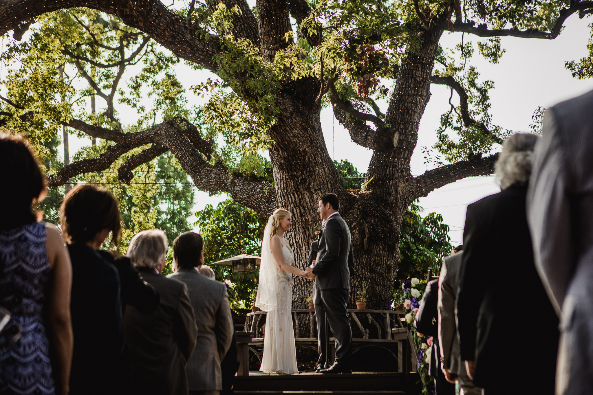 san diego wedding   photographer | couple standing in front of big tree