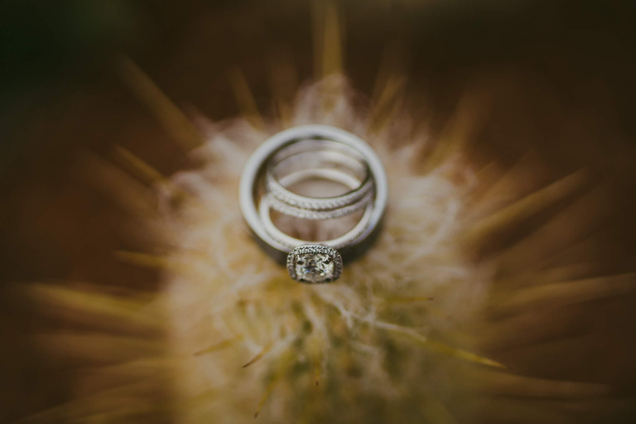 san diego wedding   photographer | rings on a dandelion