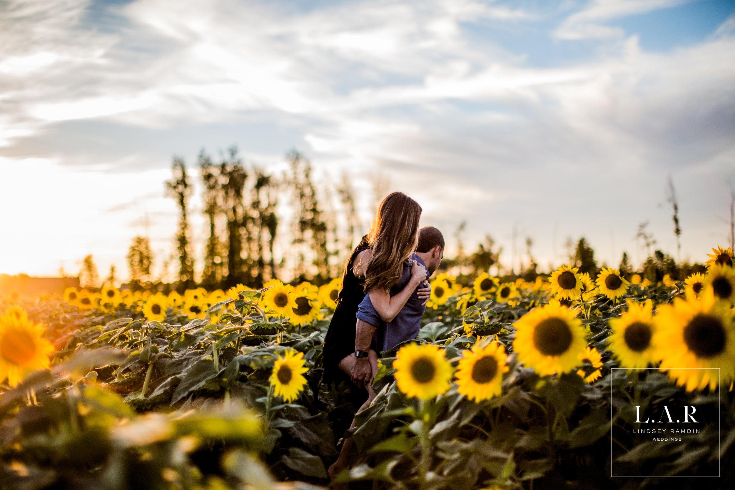 Sunflower Field Engagement Photos| L..A.R. Weddings