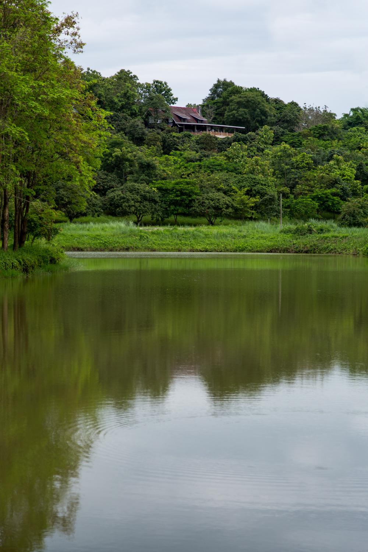 ChiangRai-Bog-21.jpg