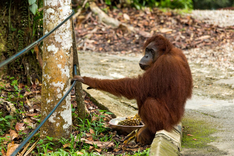 Malaysia-Blog-18.jpg
