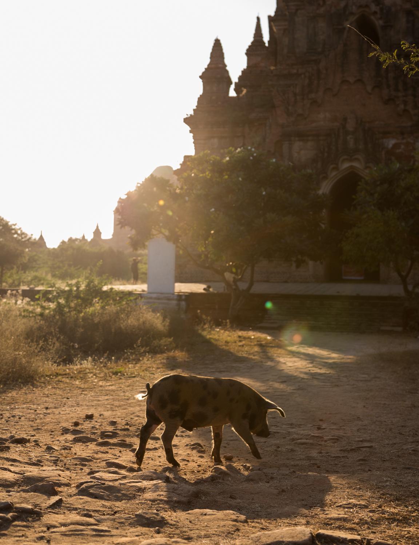 Blog-Myanmar-56.jpg