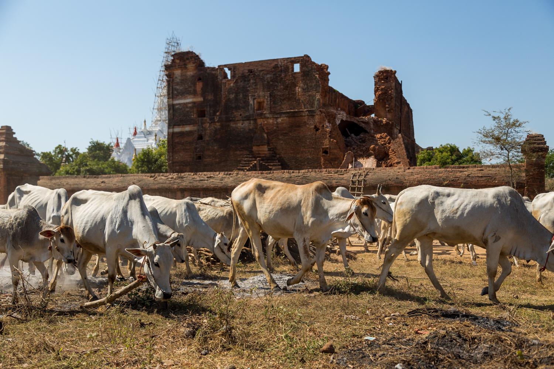 Blog-Myanmar-73.jpg