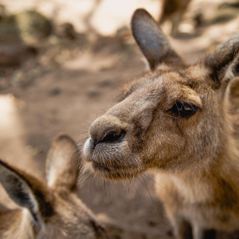 Australia-Kristen.jpg