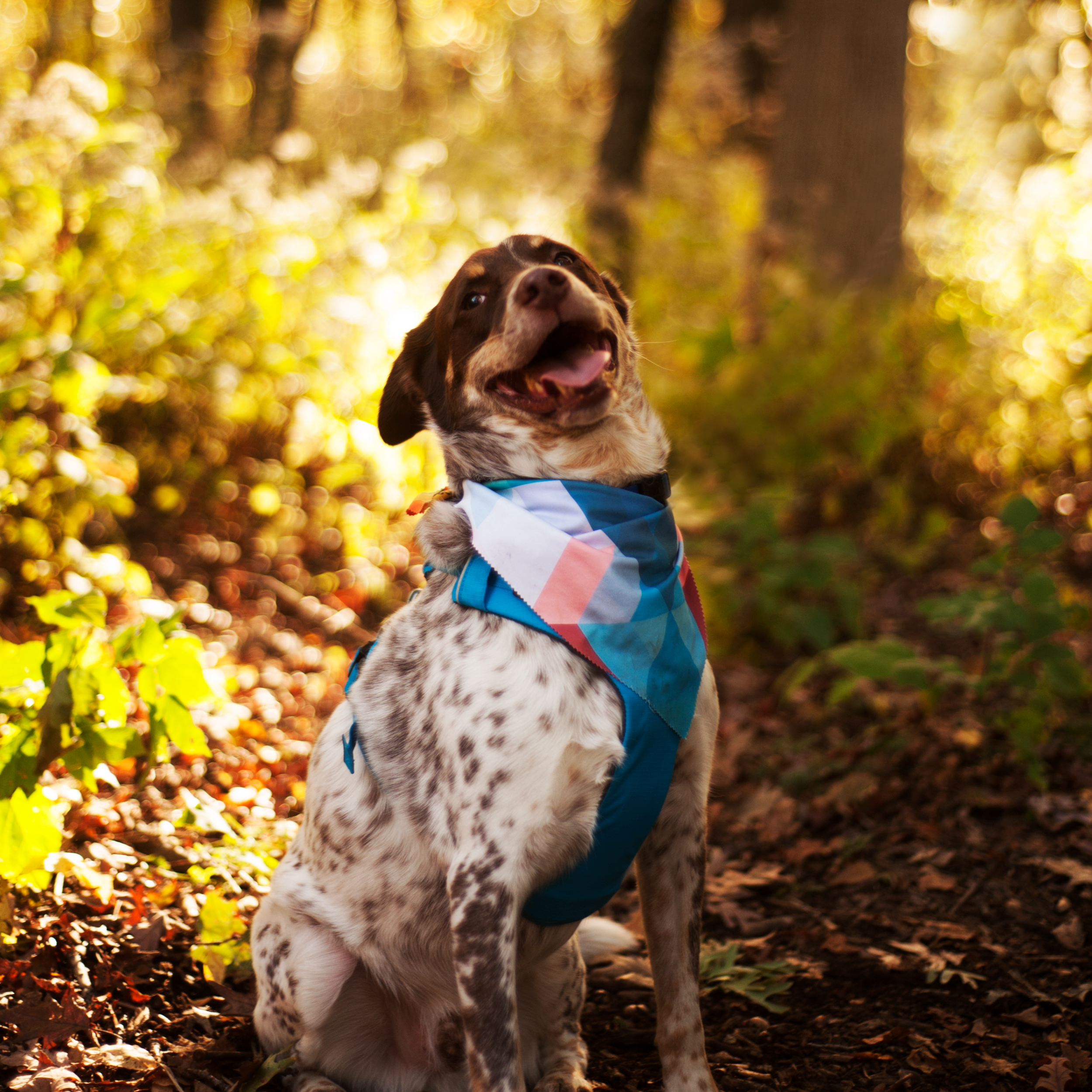 Bullett is wearing a cooling bandana from  Geopetric . Get yours 20% off with the code BULLET&EOWYN.