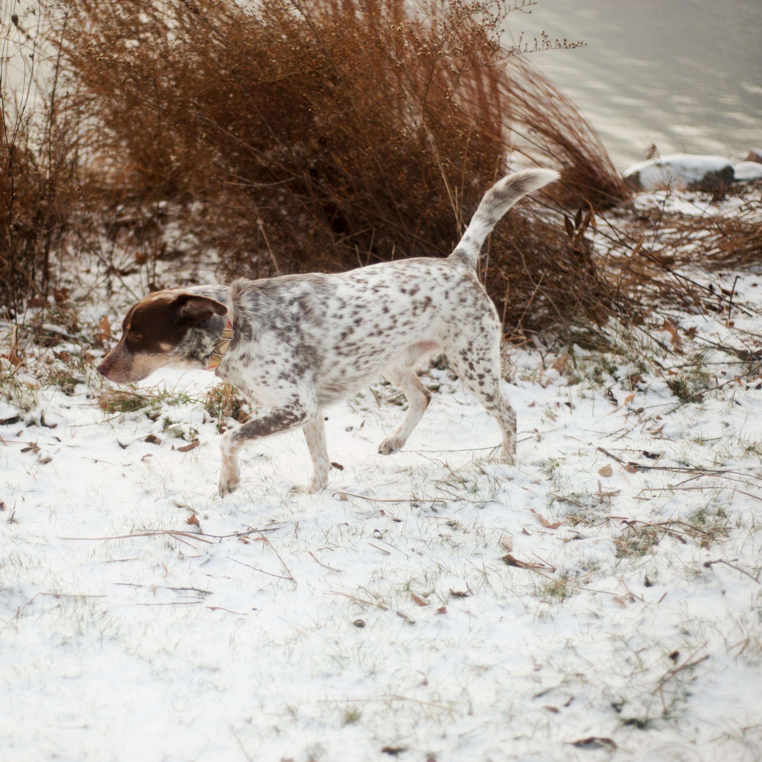 bullett_snow_01.png