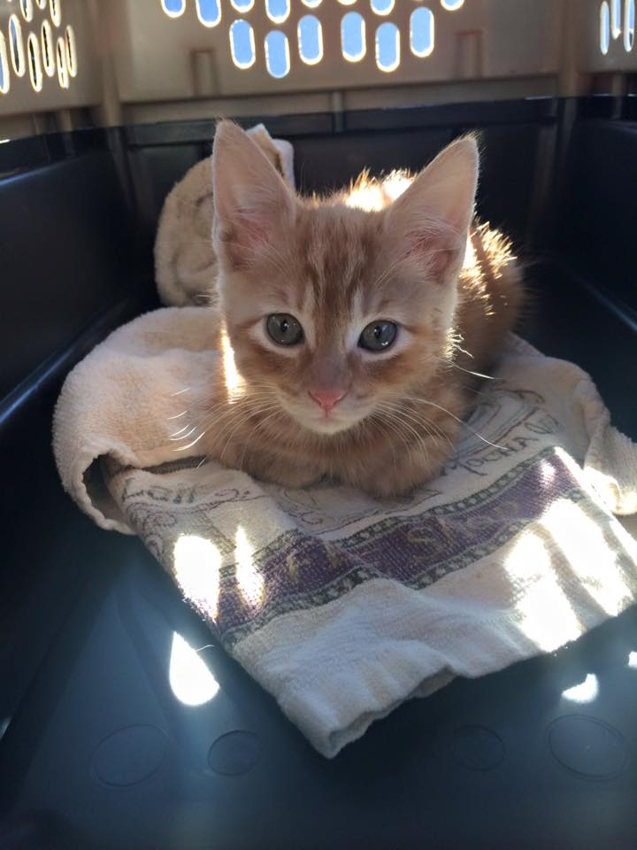 Eowyn on her way to her forever home (with us)