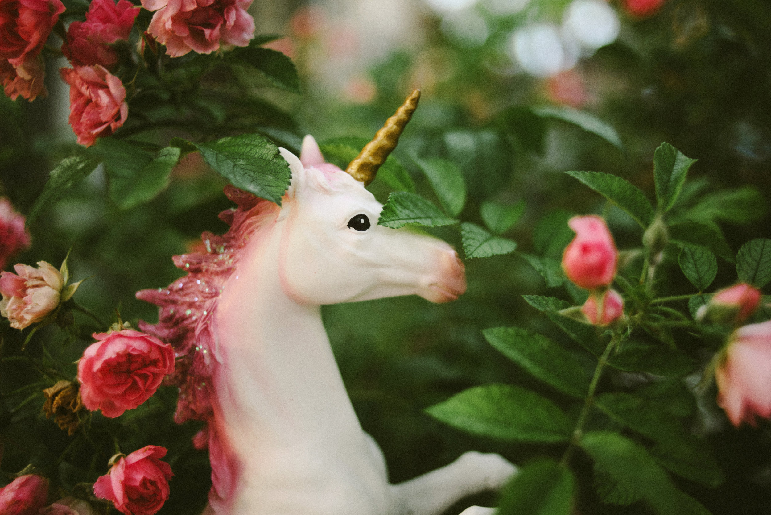 It might look like Cupcake the Unicorn is in a magical fantasy land, but in fact this is just in our neighbor's bushes!