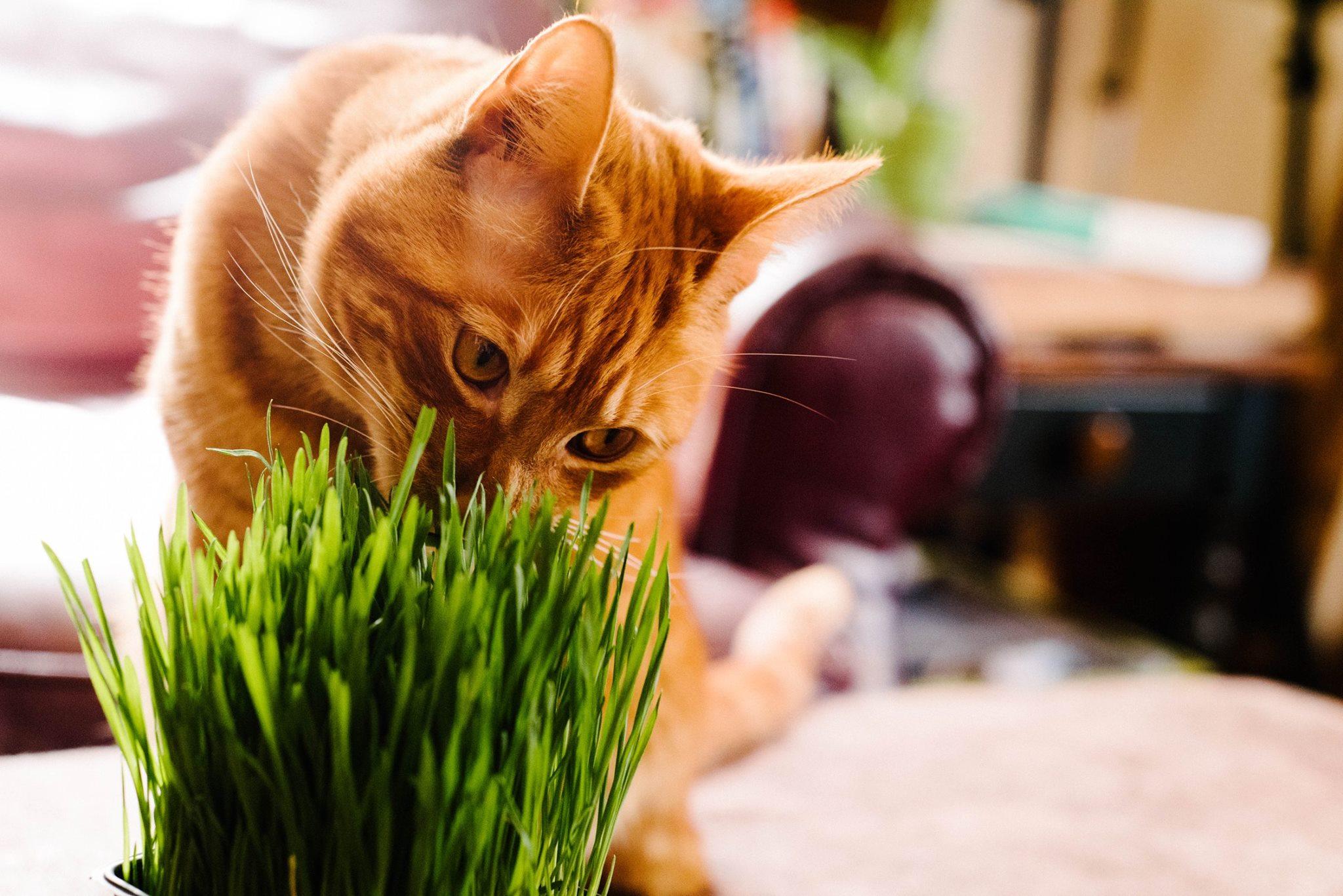 farmersmarketblog-catgrass2.jpg