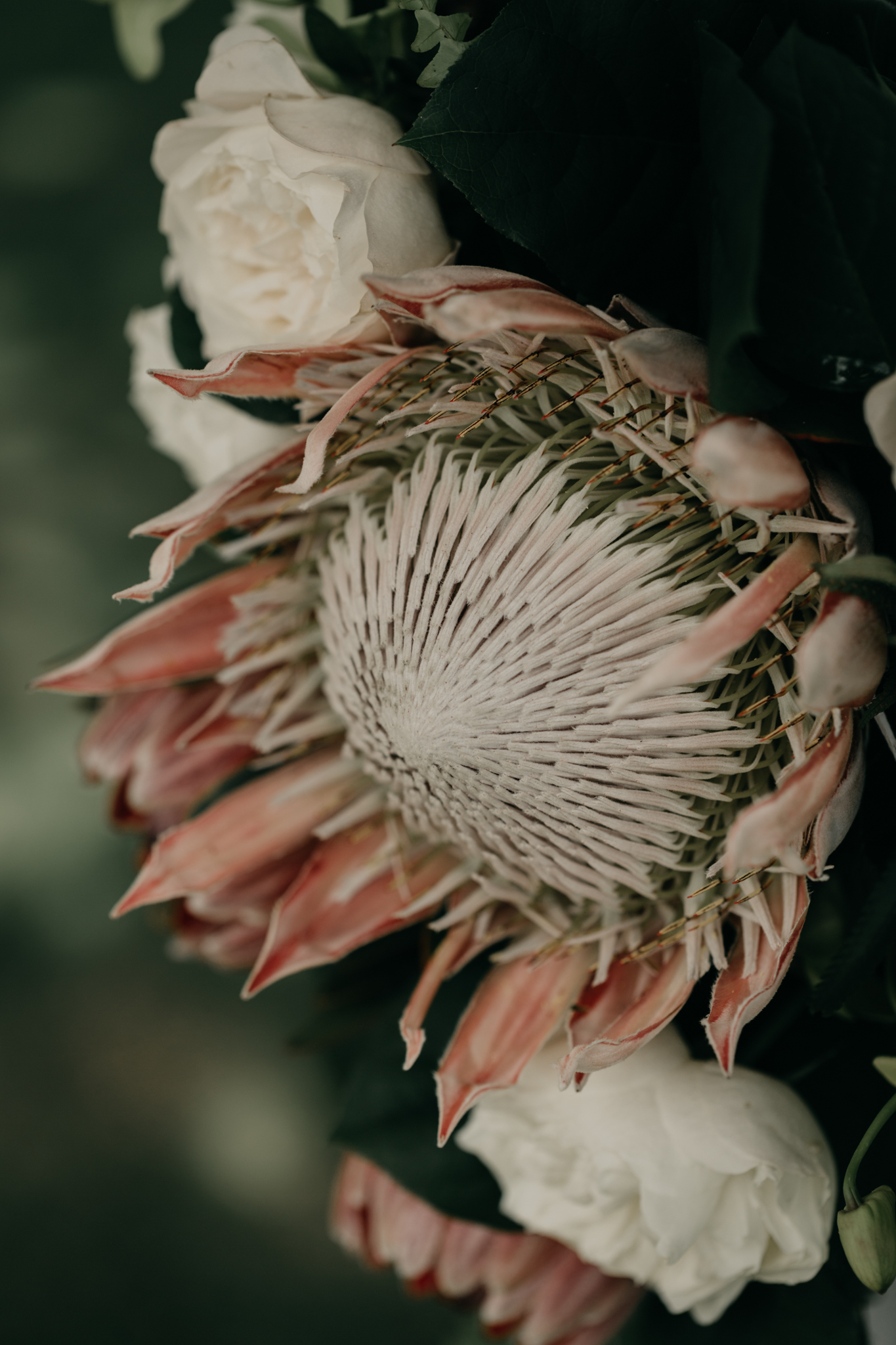 Protea Wedding Arch