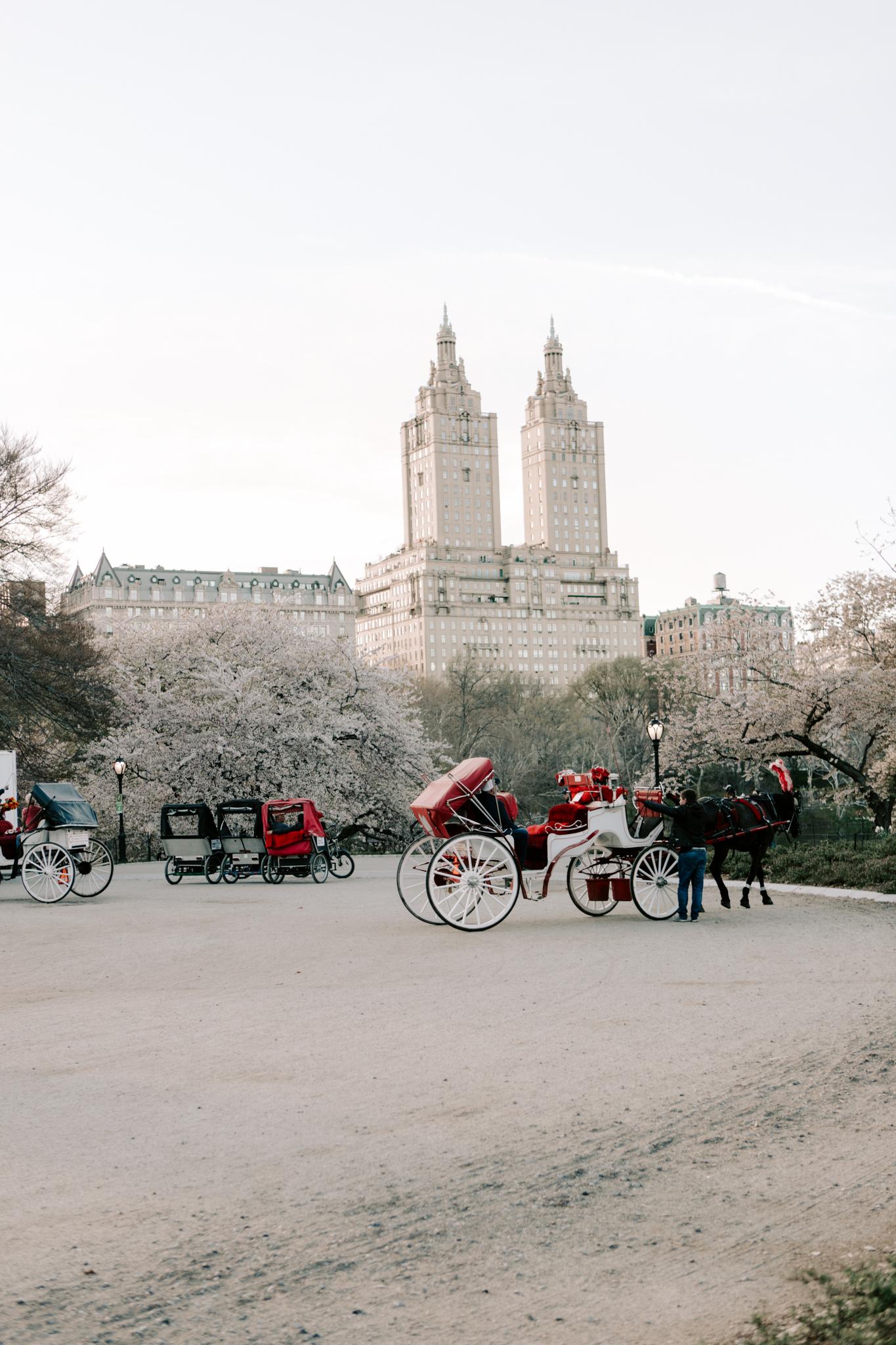 Central Park Horse Carriages