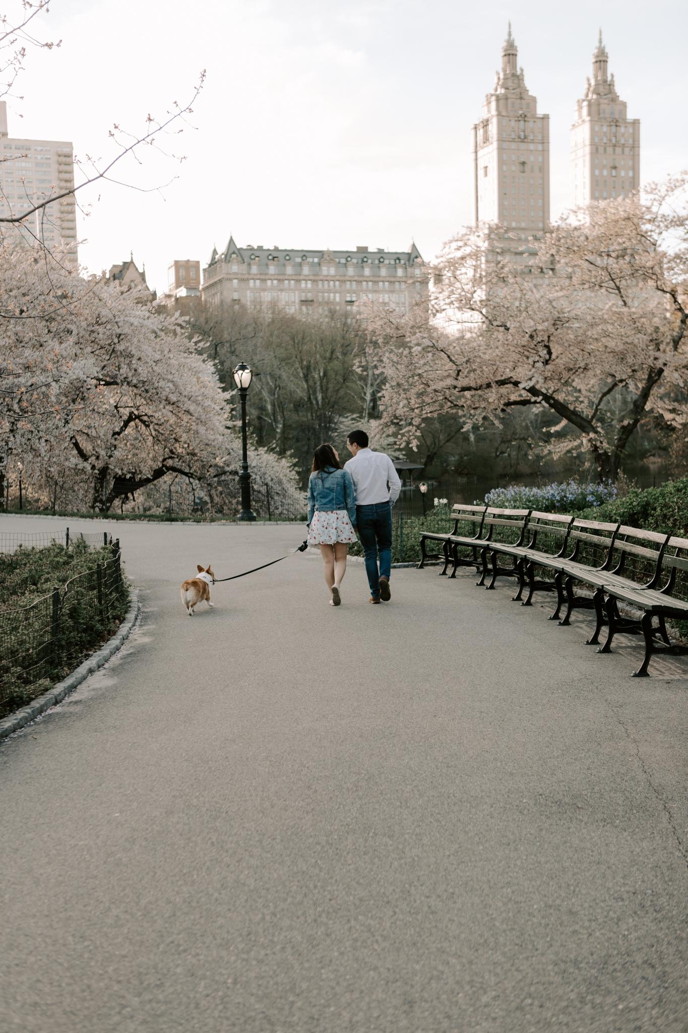 Central Park Spring Engagement Photos