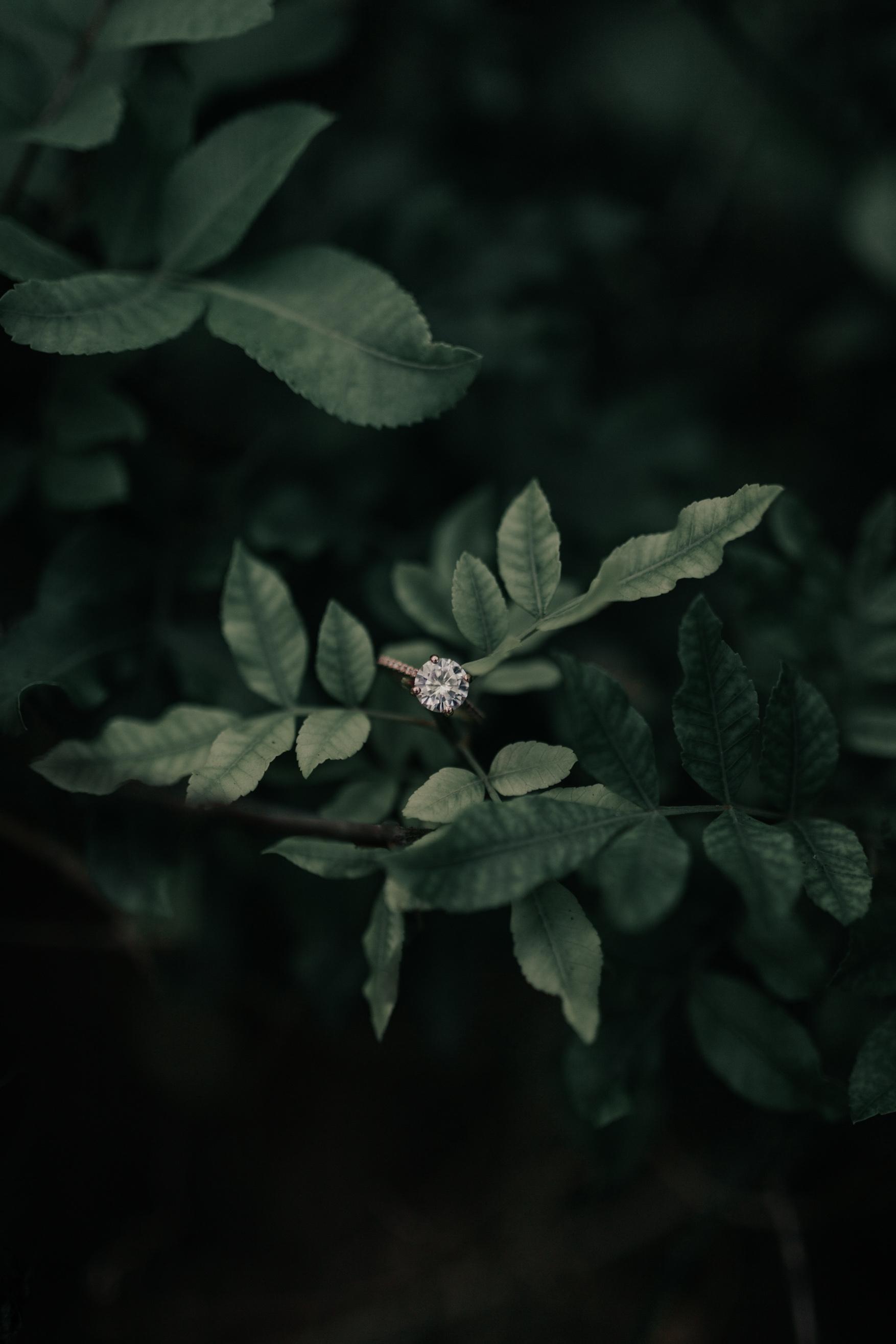 Rosados Box Eloise Ring By Hawaii Wedding Photographer Desiree Leilani