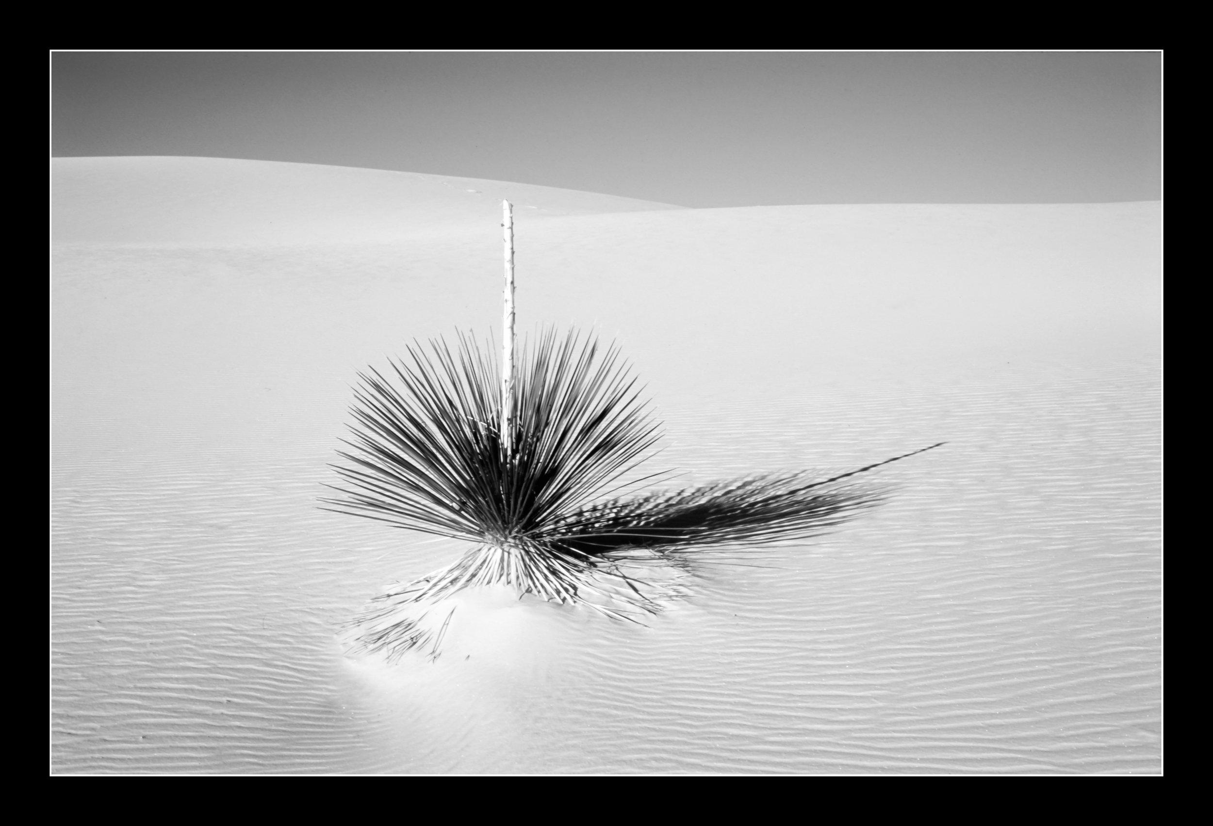 whitesandsprovia123bw.jpg