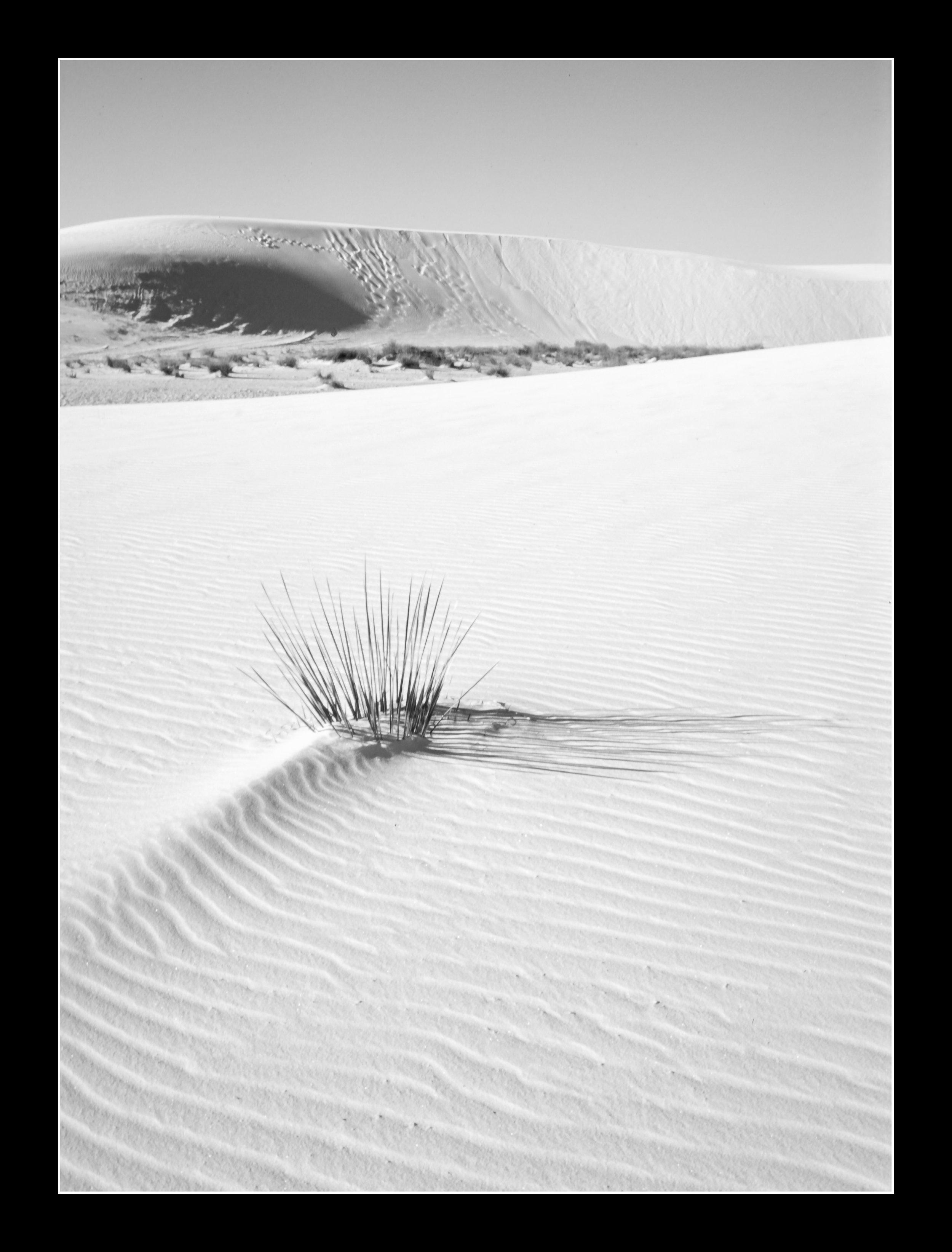 whitesandsprovia124bw.jpg