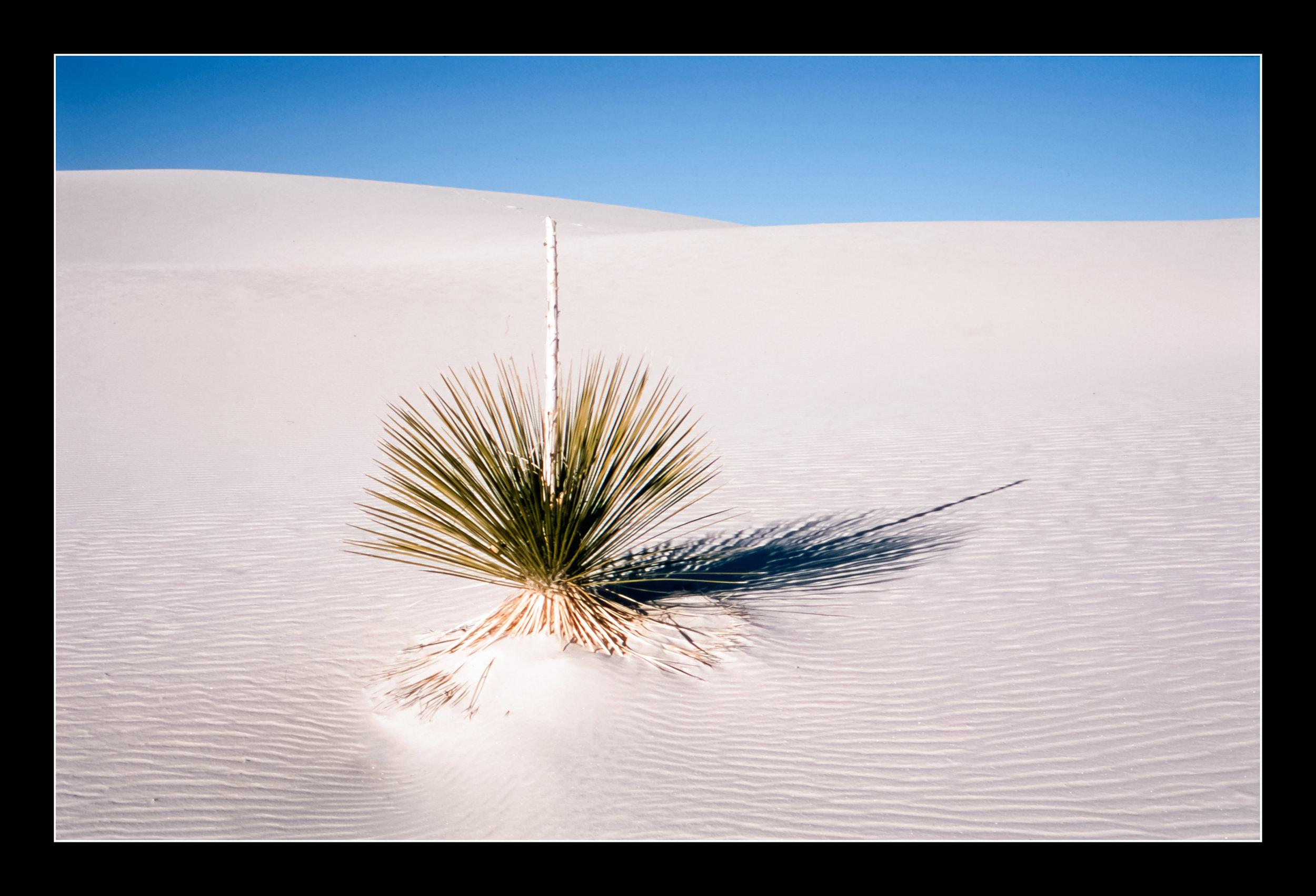 whitesandsprovia123.jpg