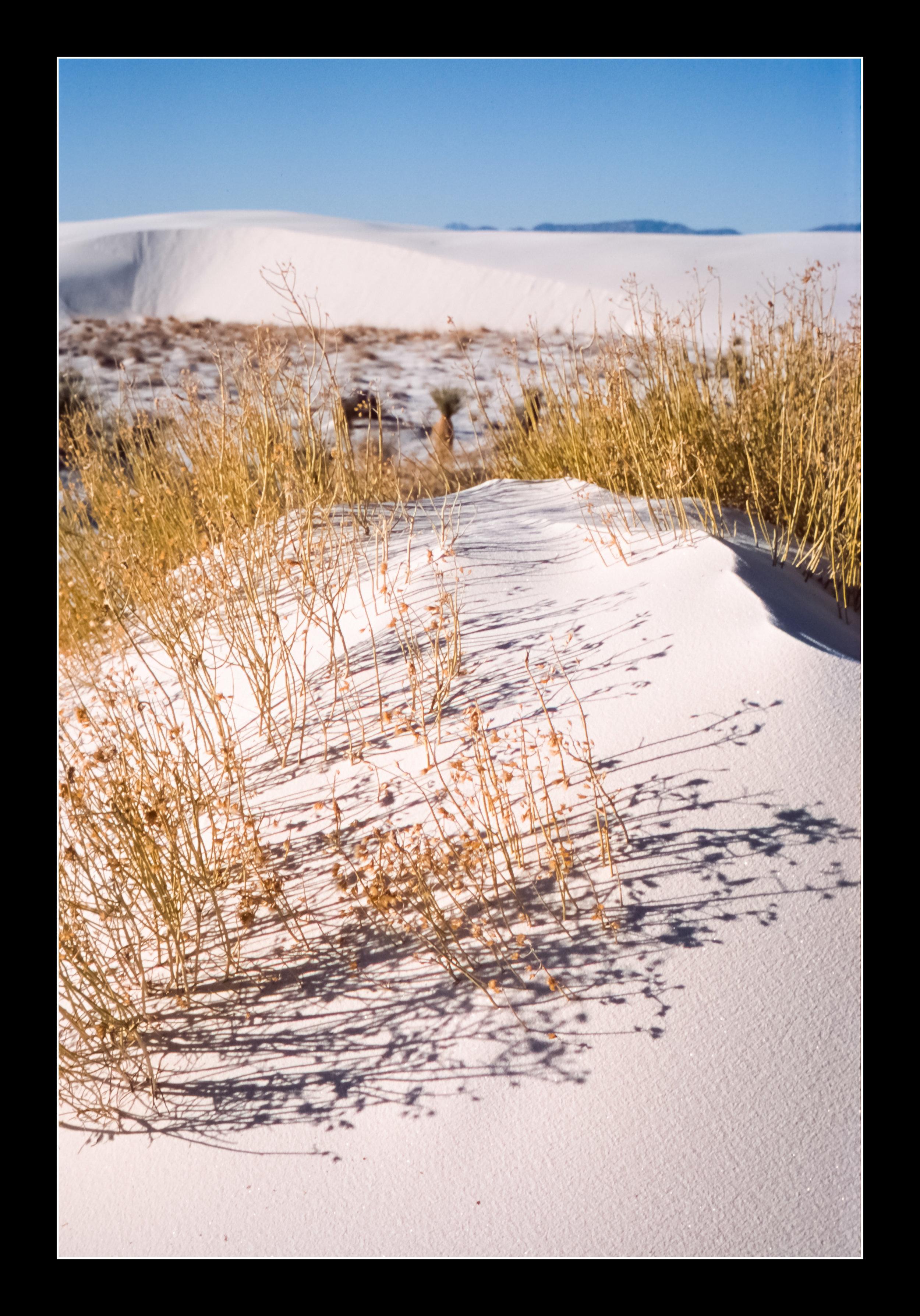 whitesandsprovia126.jpg