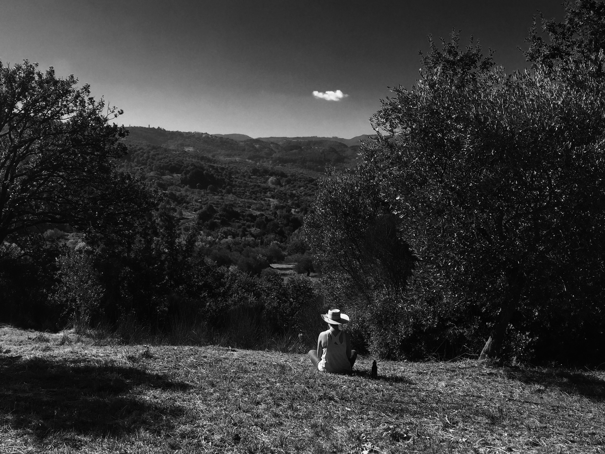 meditating-in-the-olive-groves_33282076192_o.jpg