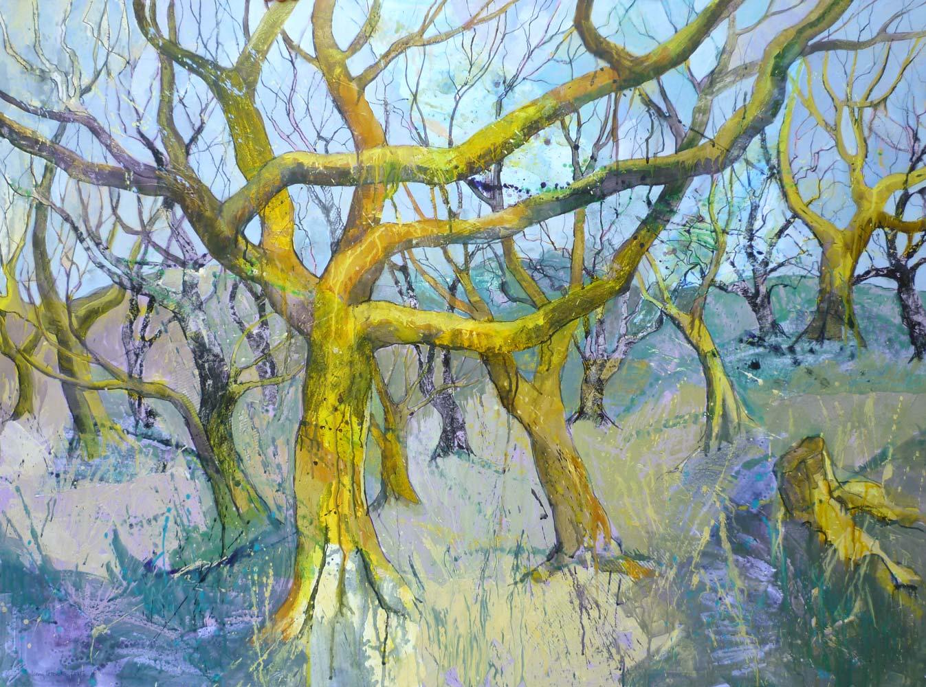 Moss covered trees, Steeple Wood