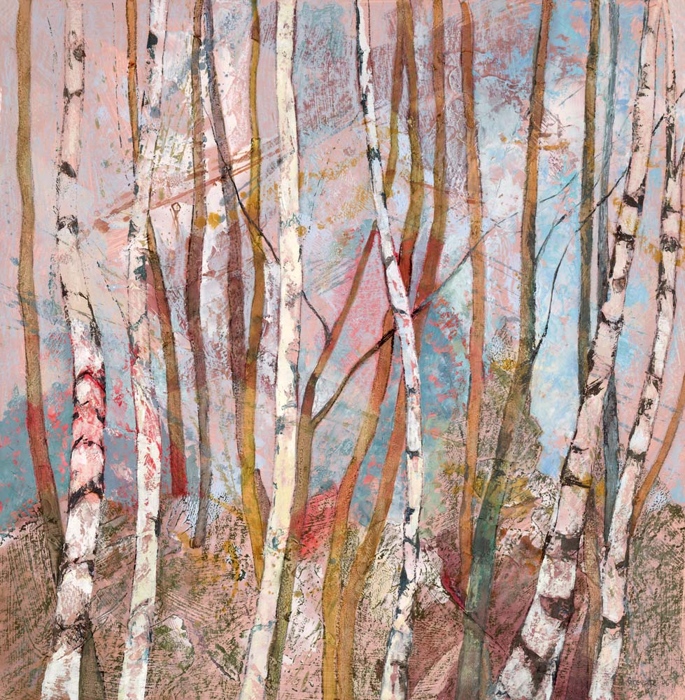 Young silver birch trees