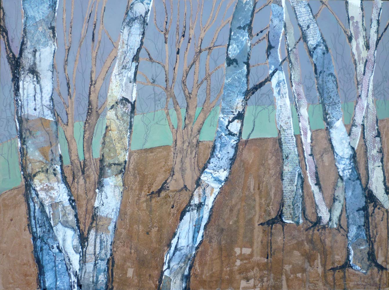 Trunks of silver birches