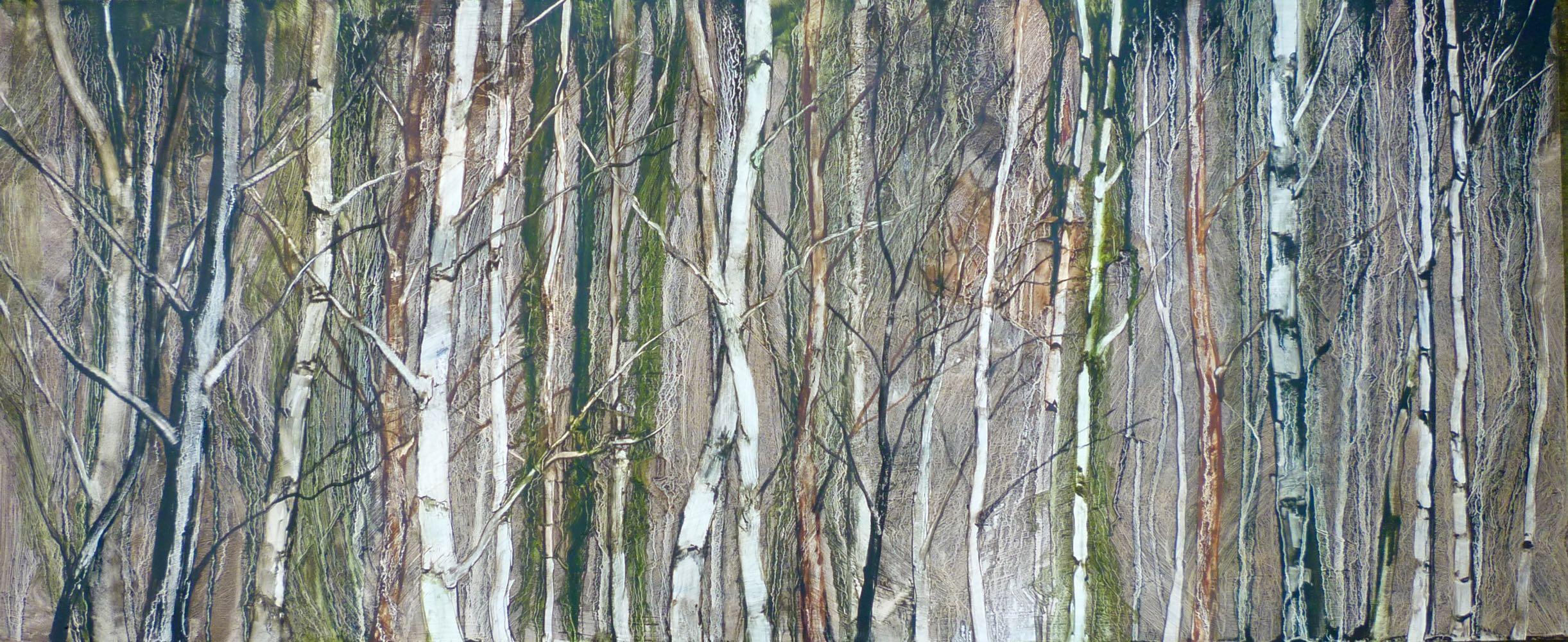 Deep inside the birch forest