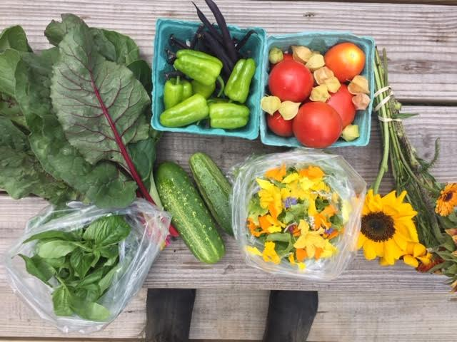 CSA (weekly vegetable shares) at Terra Firma
