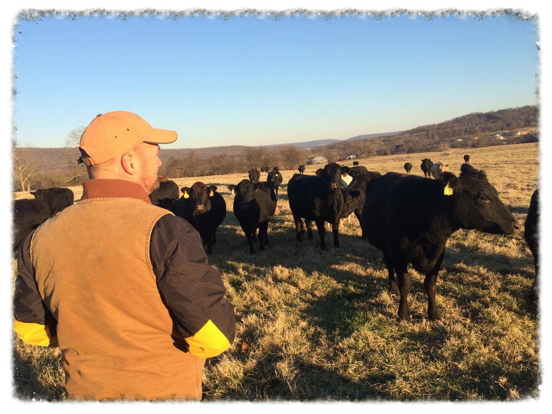 Farmer Joe and his cattle