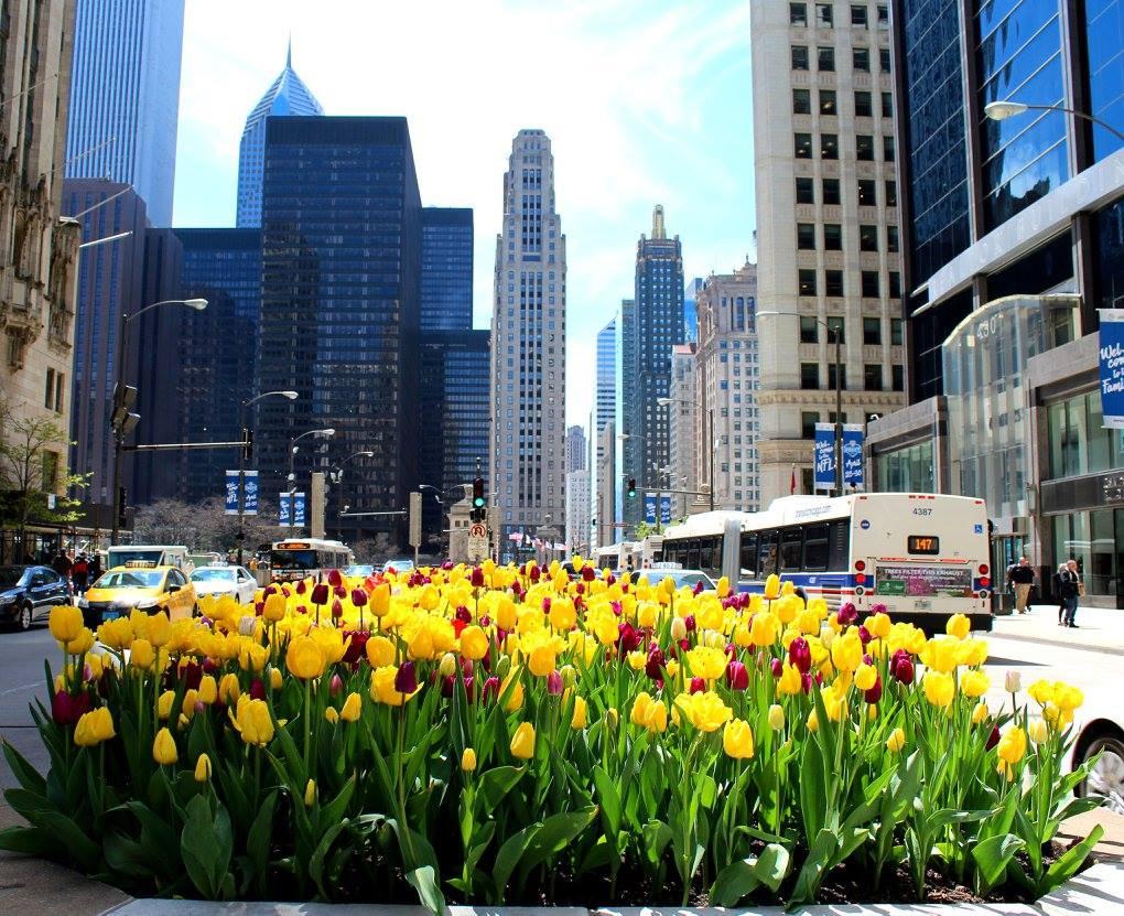 Michigan Avenue; May 2016