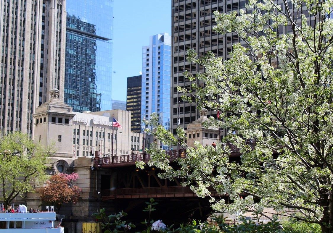 View from the Chicago River Walk; April 2016
