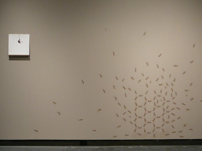RAID-bee.jpg