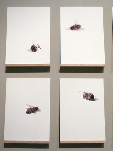 bees-4.jpg