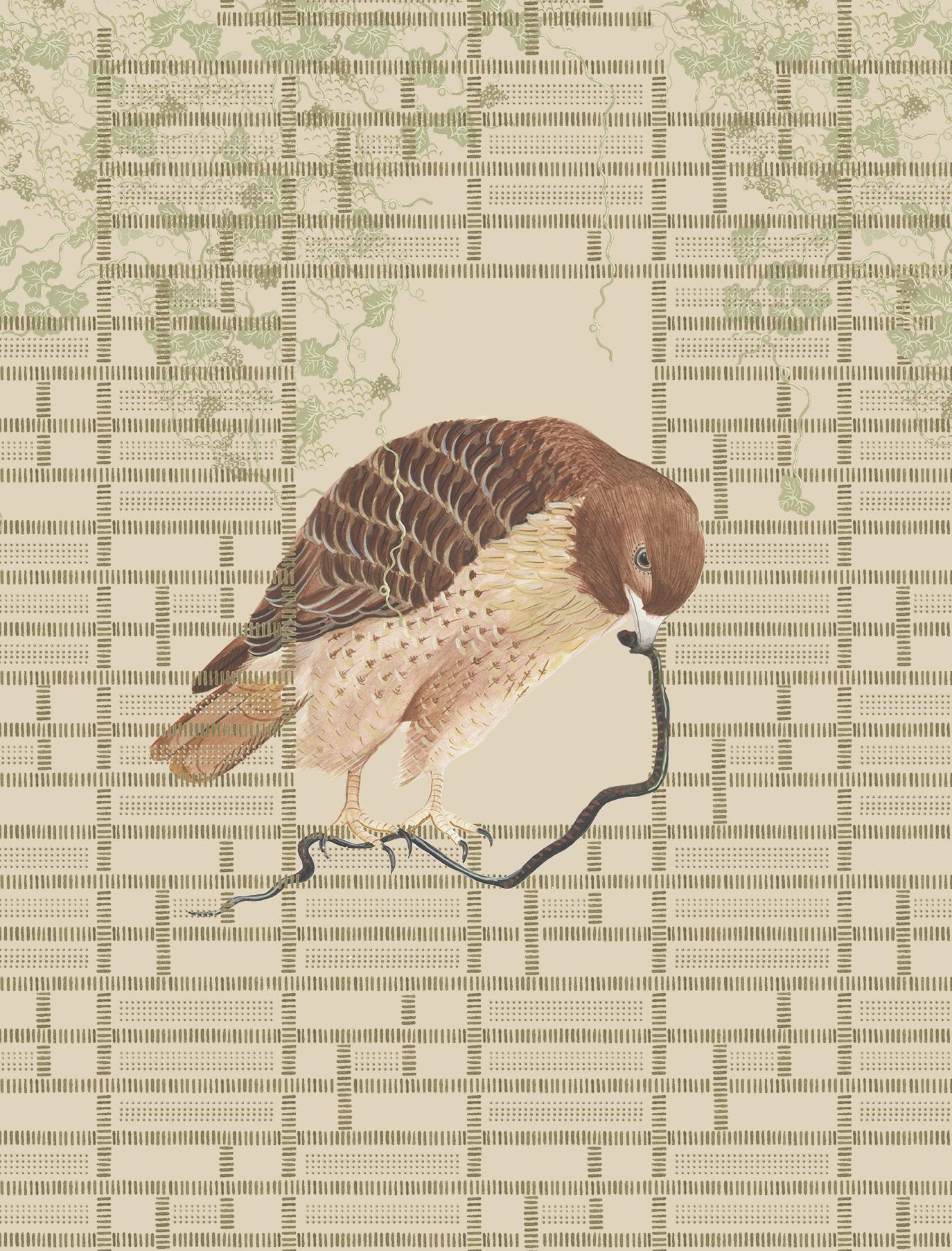 hawk-bigger.jpg