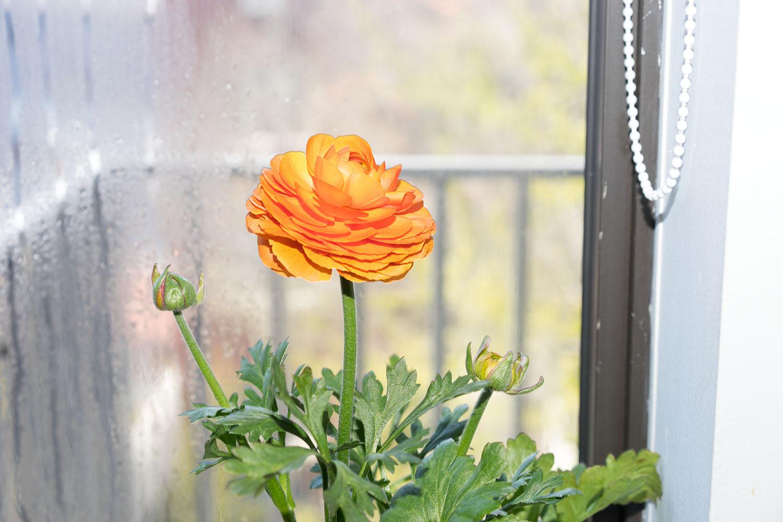 A birthday flower for Jenn.